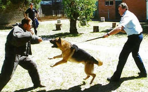 k9-training-2